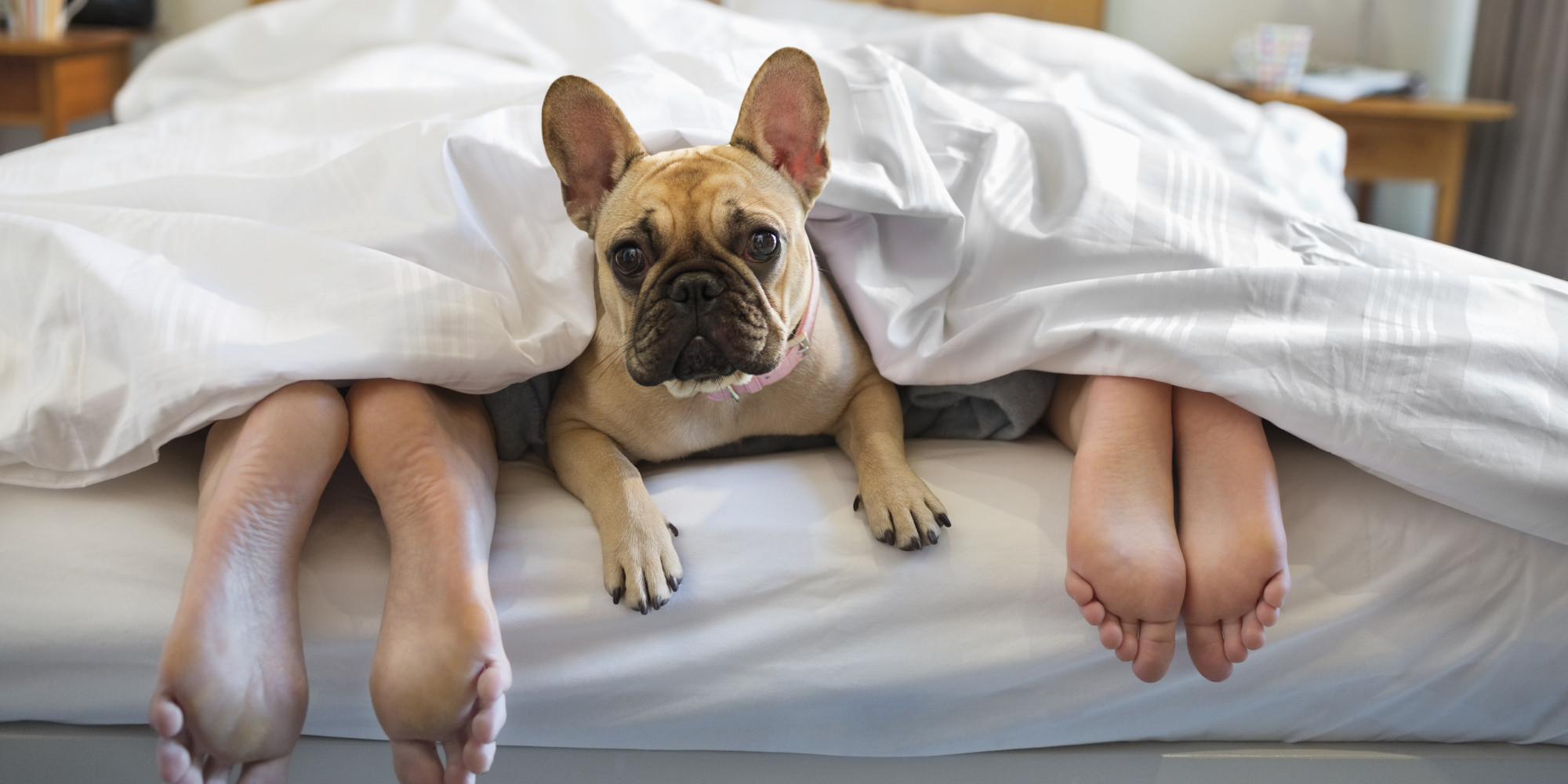 New Research Shows That Sleeping With Your Dog Is A Bad